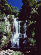 Waterfall, Minnamurra Rainforest NP